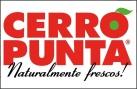 www.cerropunta.net/