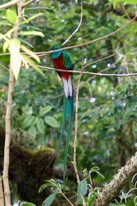 Quetzal entre ramas, Bajo Grande