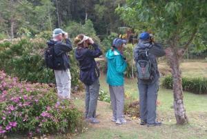 Observadorees de aves