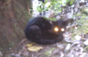 Criatura de Ojos de Luz