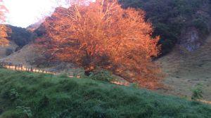 Árbol encendido